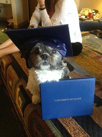 Black Bear Inn and Conference Center: Teddy goes to graduation party at Black Bear Inn Suite