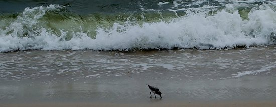 St. Joseph Peninsula State Park: Waves