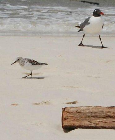 St. Joseph Peninsula State Park: Birds