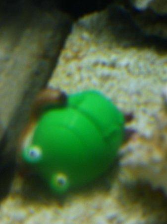 The Florida Aquarium : How cute