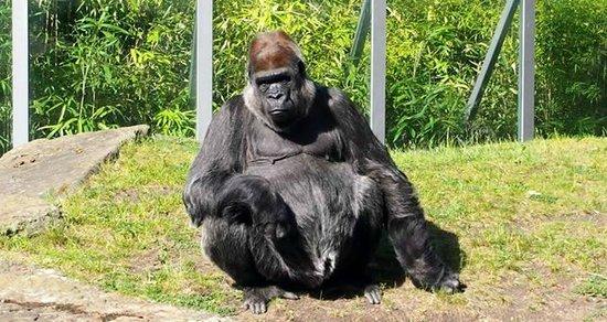 Zoologischer Garten (Berlin Zoo) : zoo1