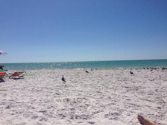 Gulf Drive Cafe : Beach