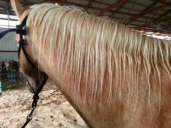 Colorado Cattle Company: Horses Main