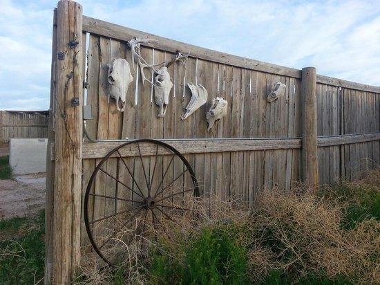 Colorado Cattle Company: A fence
