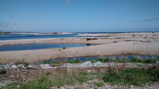 WDC Scottish Dolphin Centre: River Spey into the sea