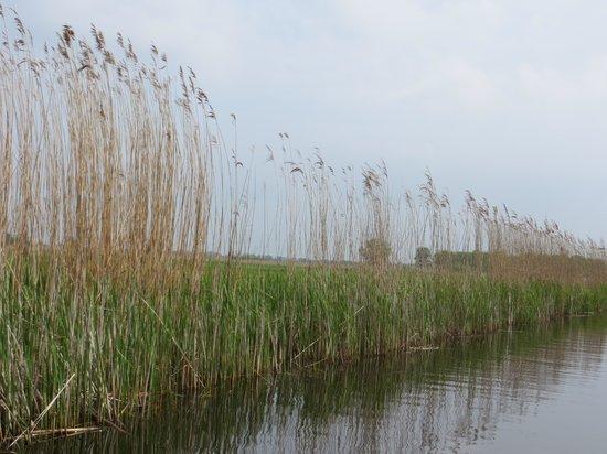 De Rietstulp: De Weerribben,natuur gebied.