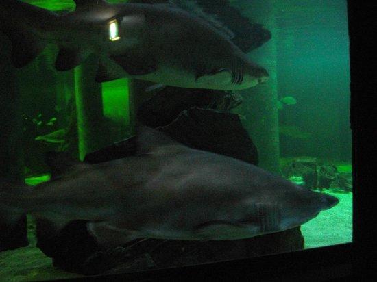 aquarium - Picture of Acquario di Cattolica, Cattolica - TripAdvisor