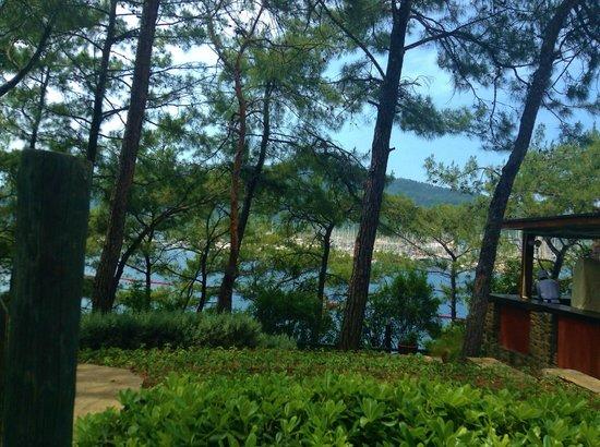 TUI Sensimar Marmaris Imperial Hotel: Forest/Sea View