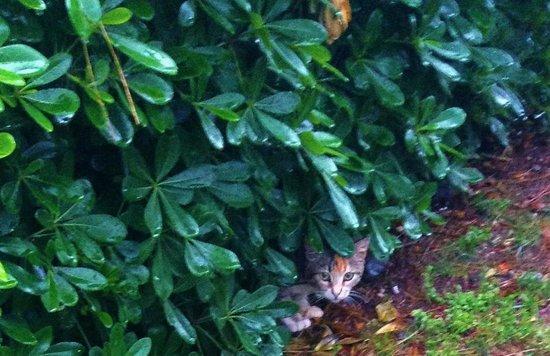TUI BLUE Marmaris: Cat in the bush