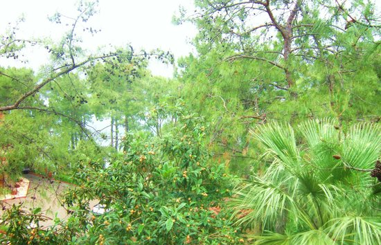 TUI BLUE Marmaris: Lush greenery