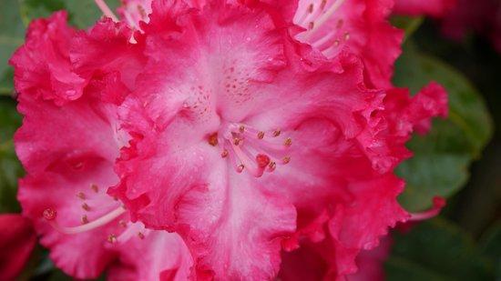 Rhododendronpark Bremen : Brilliant colours