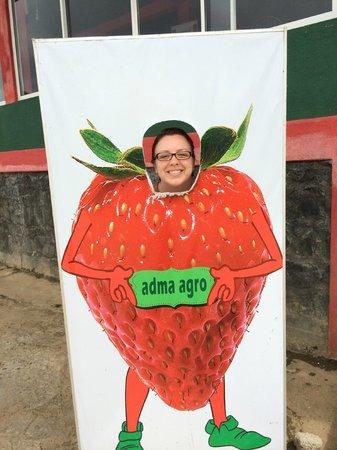 Adma Agro fresh strawberry foods, Nuwara Eliya, Sri Lanka: Клубничка