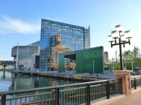 Inner Harbor: National Aquarium