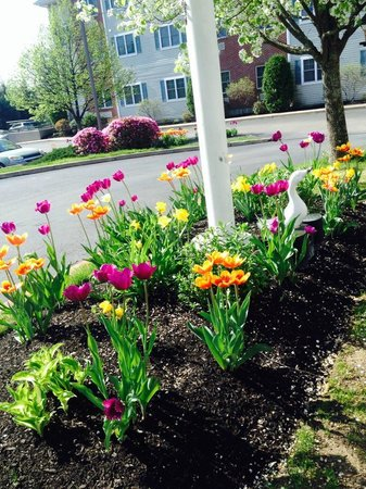 Homewood Suites by Hilton Boston/Andover: Spring time!