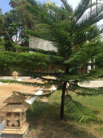 Baan Karonburi Resort : Растительность