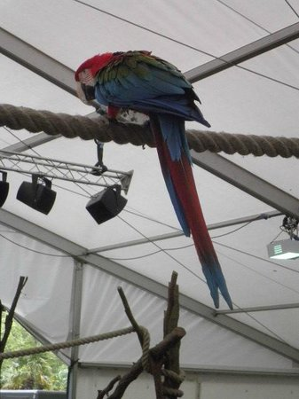 ZSL London Zoo : parrot in active animals