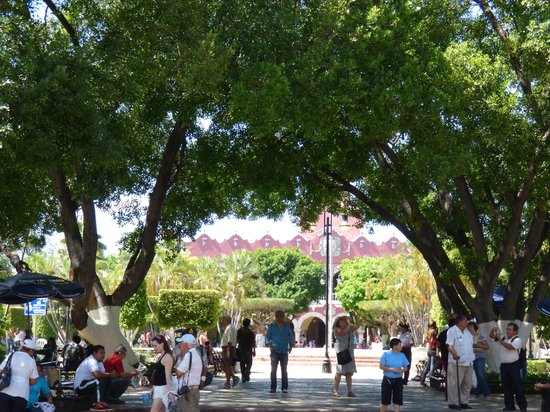 Plaza Grande: Plaza Grand Day