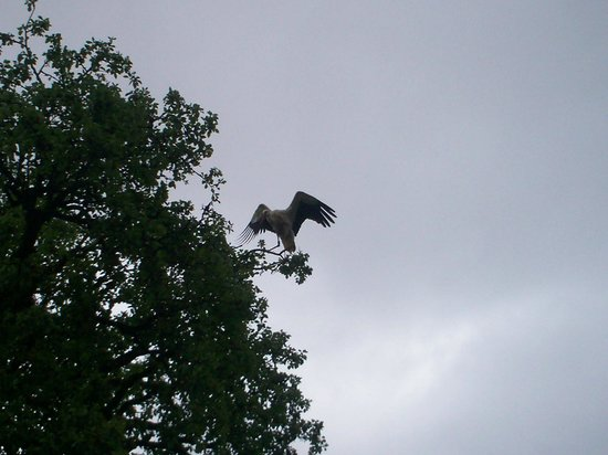 Affenberg Salem: Cicogna in volo