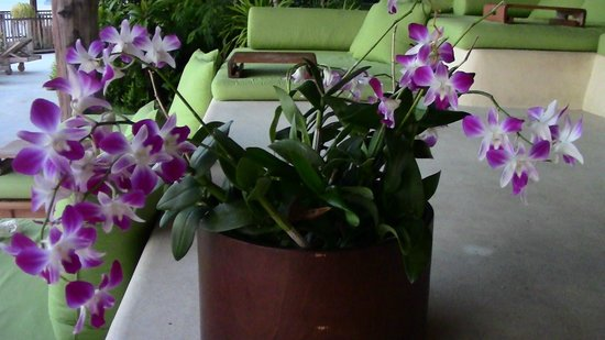 Six Senses Yao Noi : one of the many amazing orchid's