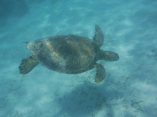 Phantom Divers: Turtle 1