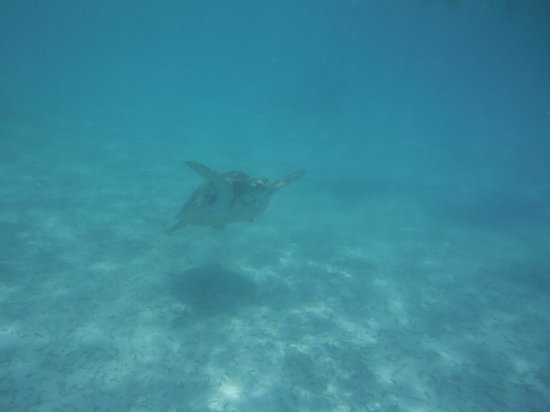Phantom Divers: Turtle 2
