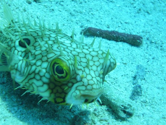 Quality Time Divers: Puffer