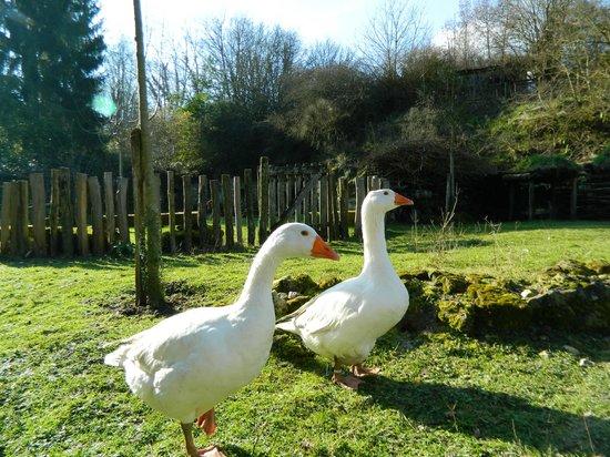La Vallée Troglodytique des Goupillières : Oies de touraine
