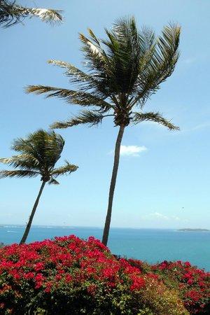 El Conquistador Resort, A Waldorf Astoria Resort: Palm Vista