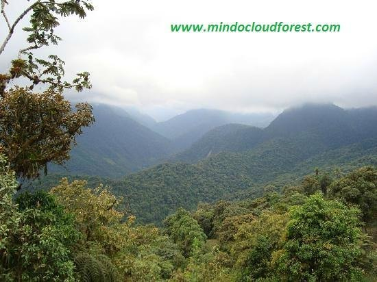 Mindo Cloud forest Ecuador