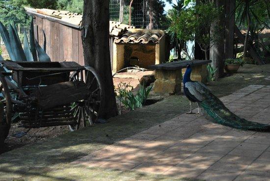 B&B Villa San Marco : amici del cortile