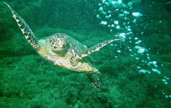 Rocket Frog Divers: Turtle