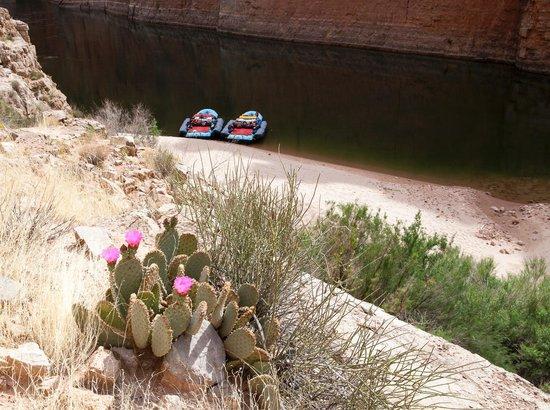 Colorado River & Trail Expeditions: Solitude