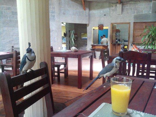 Hotel Luz de Mono: Petit déjeuner