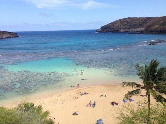 Aqua Aloha Surf Waikiki: Tours organised with ease of front desk staff
