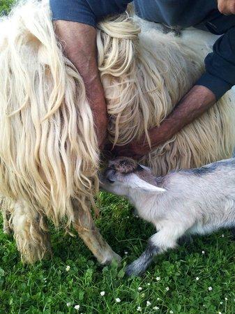 Agriturismo Due Ponti: Gli animali