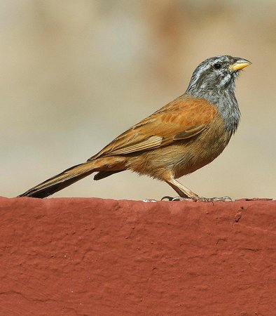Riad Dar Tamlil: House Bunting photographed on rooftop during breakfast!