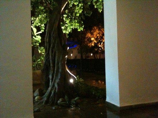 The Orangers Beach Resort & Bungalows : Tree