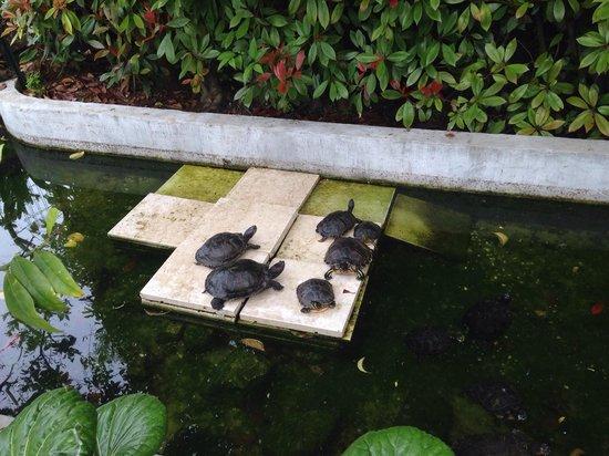 Hotel Olivi Thermae & Natural Spa : Vasca con le Tartarughe