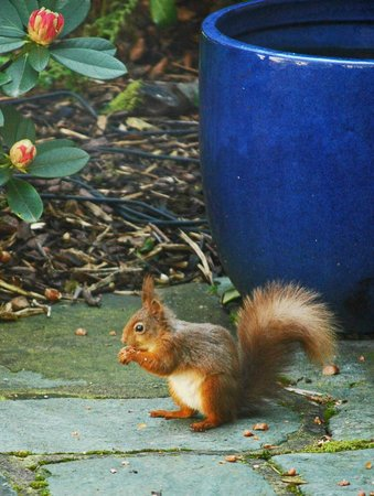 Hazel Bank Country House Hotel: Breakfast with red squirrel