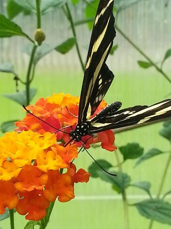 The North Somerset Butterfly House: One of many beautiful butterflies