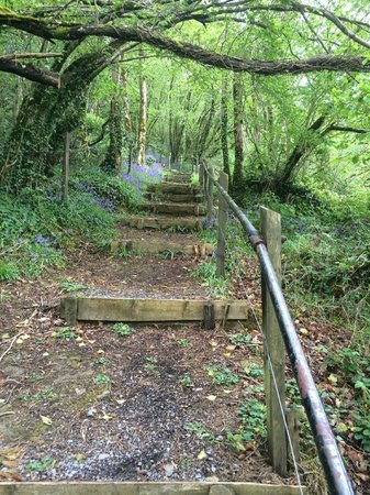 Ard Nahoo: your walk to the top over the lough Gill. It's steep !
