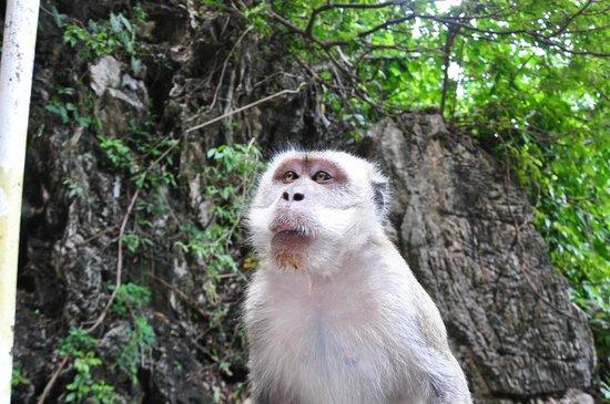 Batu Caves: Os macacos estão por toda a parte