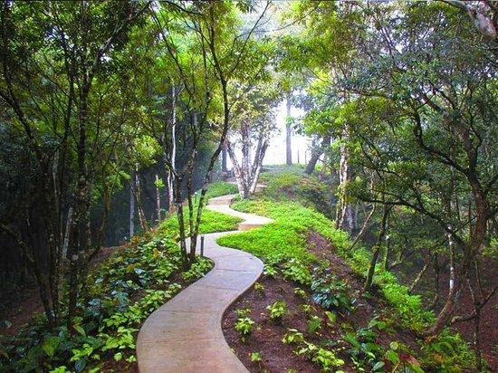 Luxury Camping Panama: Sendero hacia la Habitación