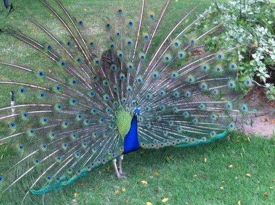 Meliá Caribe Tropical: Encuentro con la naturaleza