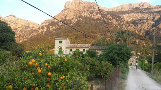 Soller, Spain: Farmhouse,  orange grove, and majestic mountains of Mallorca as seen approaching Ecovinyassa.