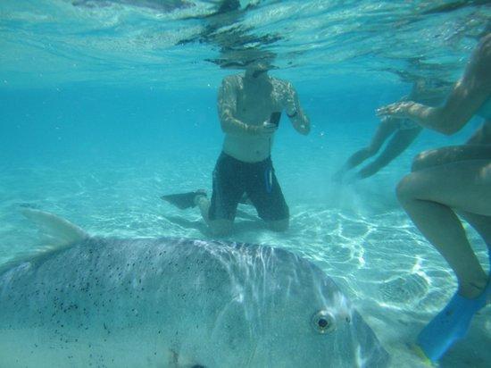 The Vaka Cruise: George the big old fish