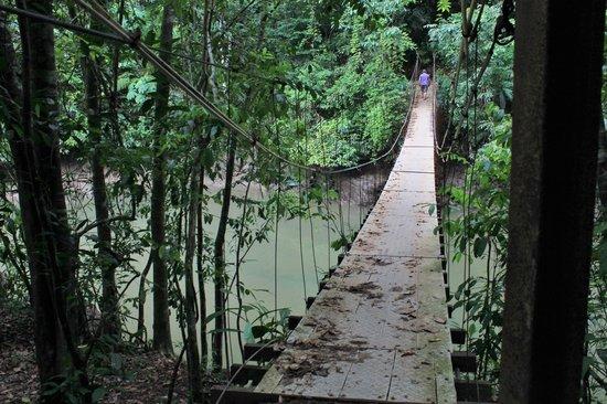 Casita Corcovado: Pont au-dessus de la rivière Agujitas