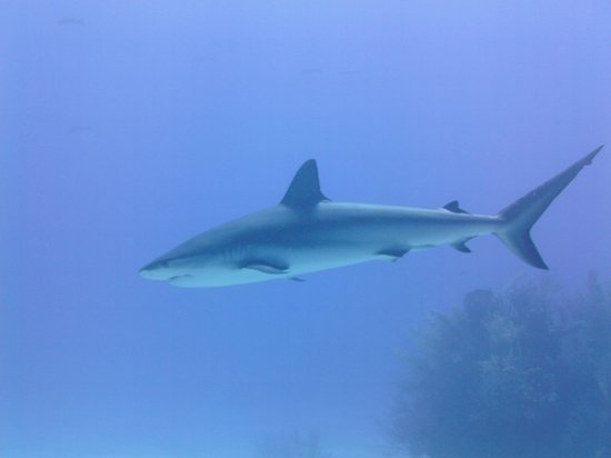 Unexso : Reef shark around, there not dangerous.