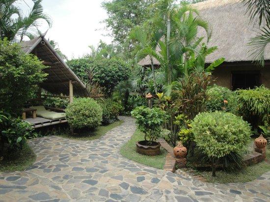 Old Tree's House: jardin