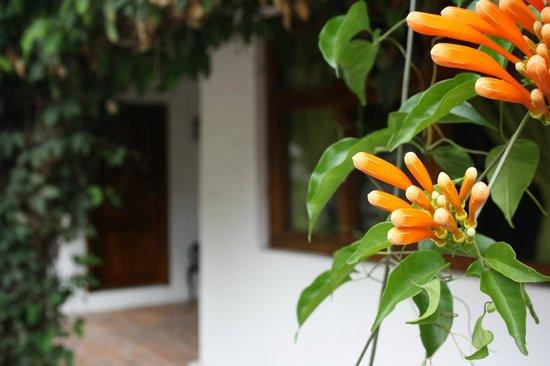 Hosteria Hacienda San Francisco : Exteriores rodeados de flores